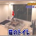 渡辺直美の自宅画像&家賃が港区の場所で70万円の理由は?今くら